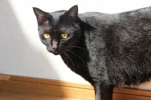 うちのネコ紹介 3匹目