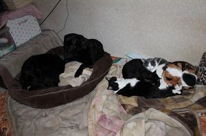 革 革製品 ミニチュアカメラ 犬猫