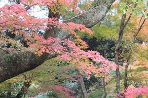 上賀茂手づくり市終了 京都 手づくり市 革製品 紅葉
