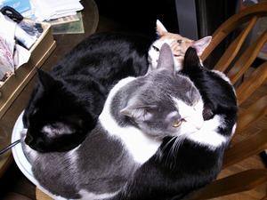 チャップス採寸 ネコ画像
