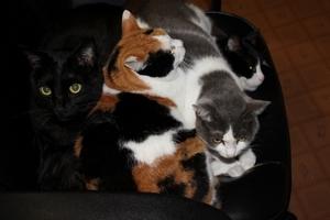 ヘルメットカスタマイズ   ネコ